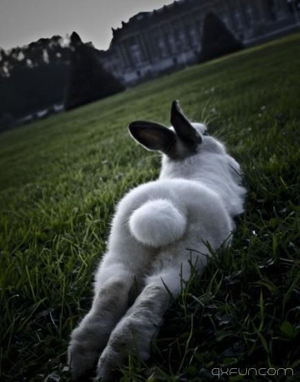 静静的草地,浑圆的臀部,性感么。