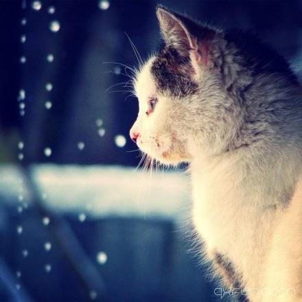 生活不是林黛玉,不会因为忧伤而风情万种。